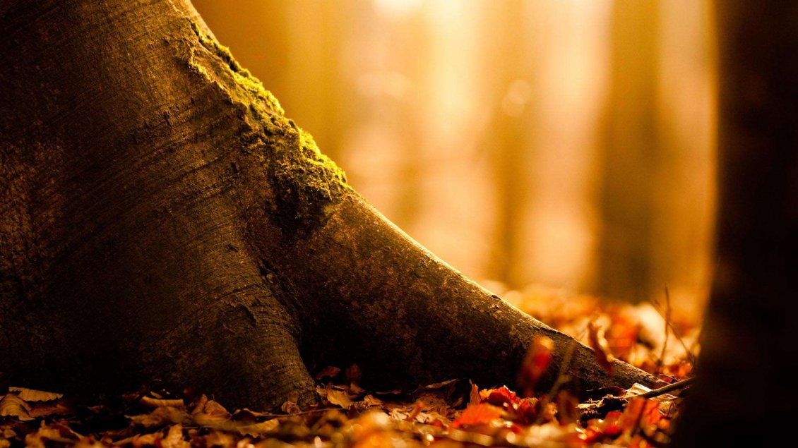 Download Wallpaper Tree trunk - Macro Autumn season wallpaper