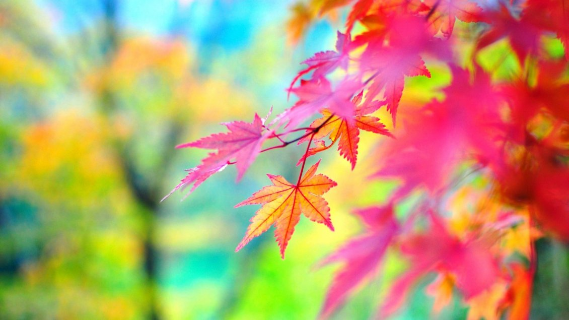 Download Wallpaper Colorful Autumn season - macro branch of tree