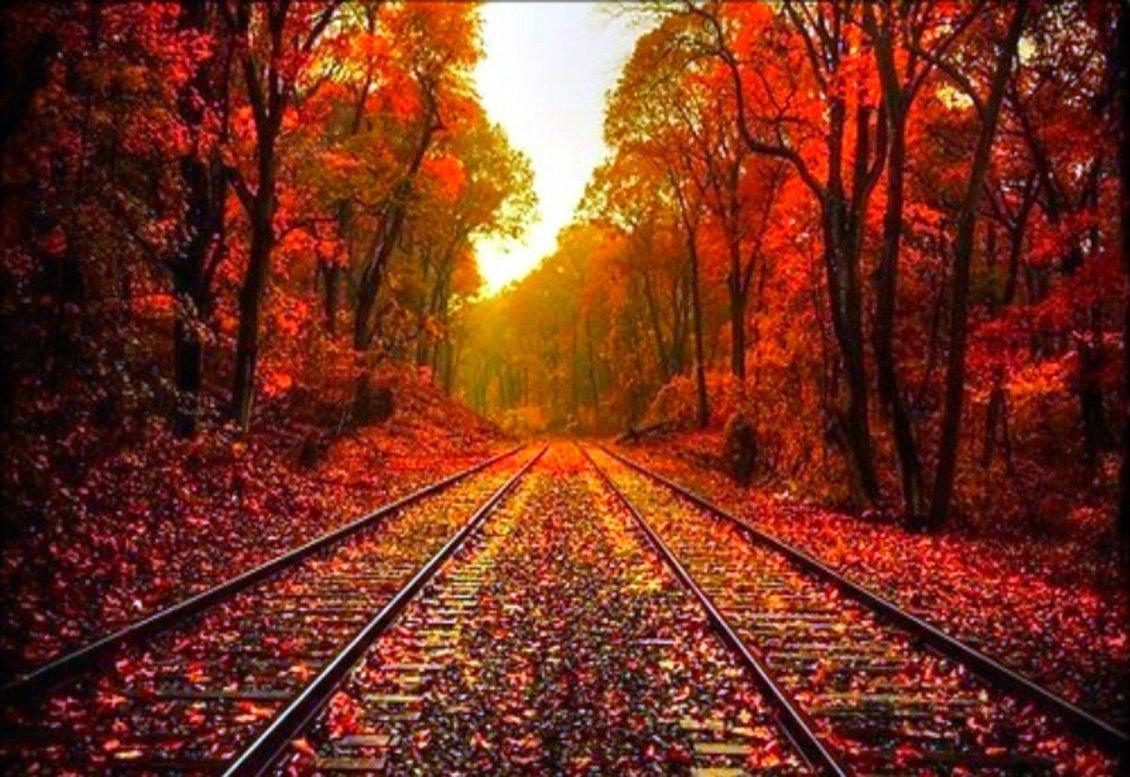 Autumn Leaves On The Rails Hd Wonderful Wallpaper