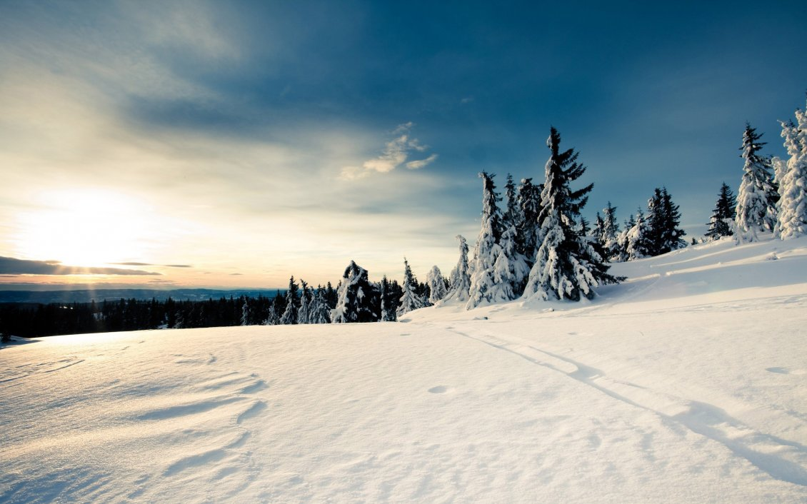Download Wallpaper White wonderful winter season - trees full with snow
