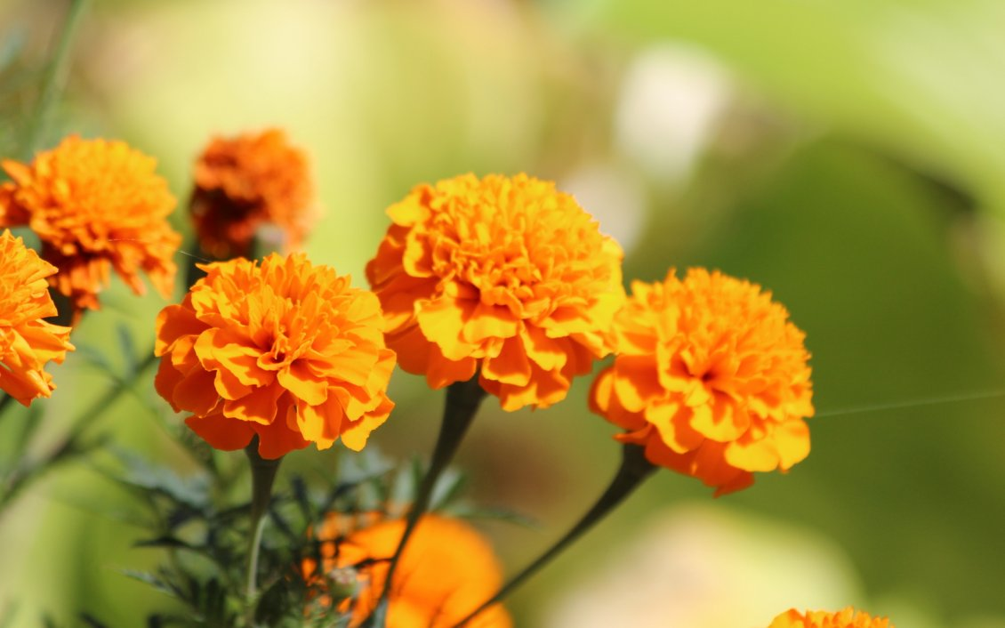 Download Wallpaper Wonderful orange flowers in the sunlight - HD wallpaper