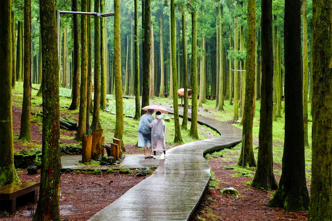 Relaxing Walk In The Tropical Forest Rainy Day