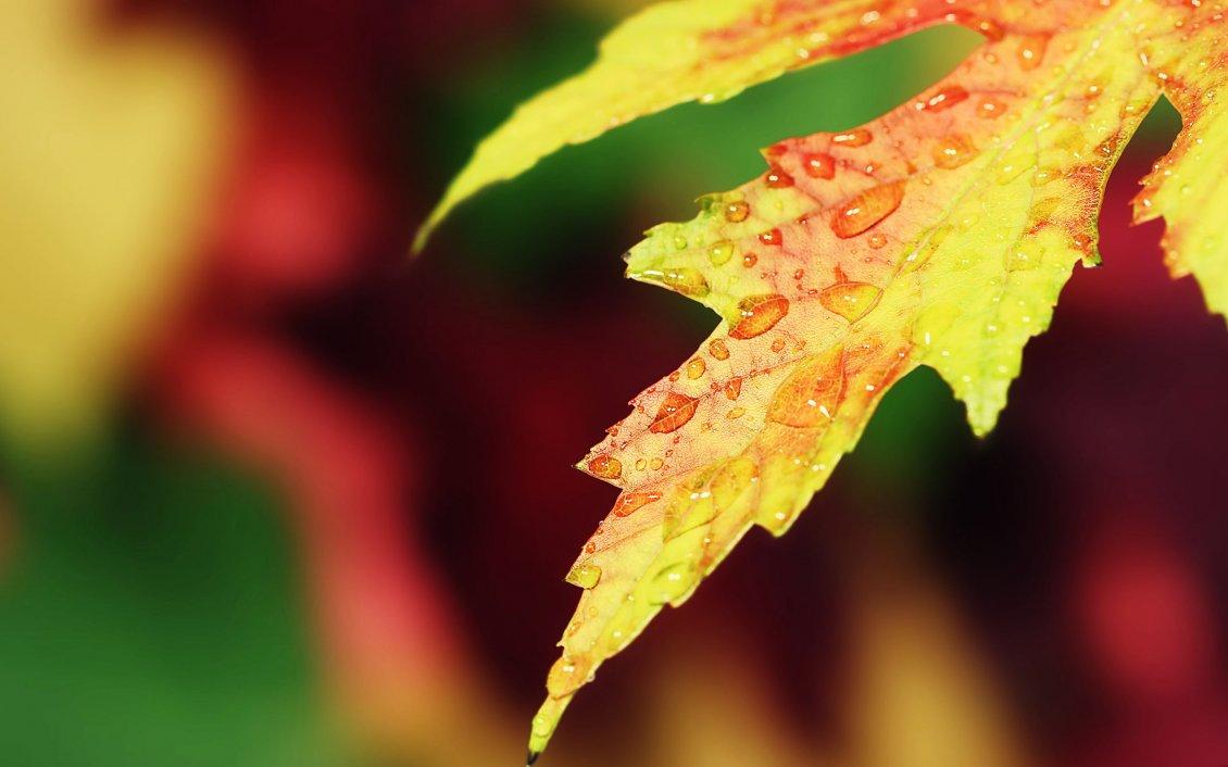Macro Water Drops On A Yellow Autumn Leaf Hd Wallpaper