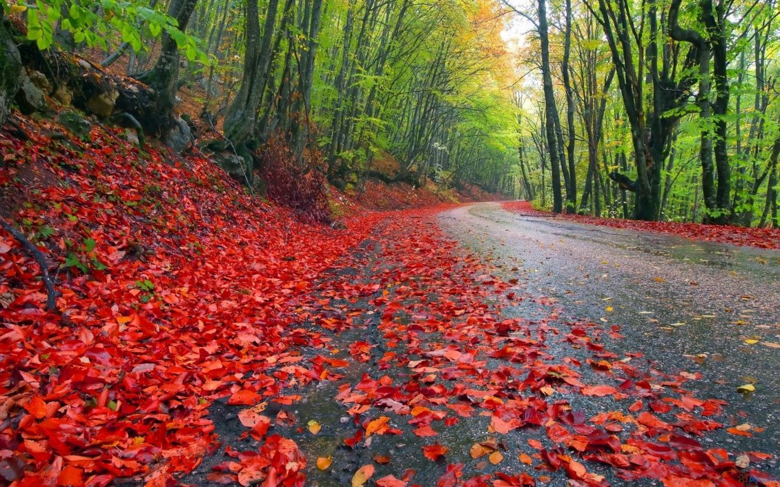 Download Wallpaper Red leaves on the road - Nature is beautiful