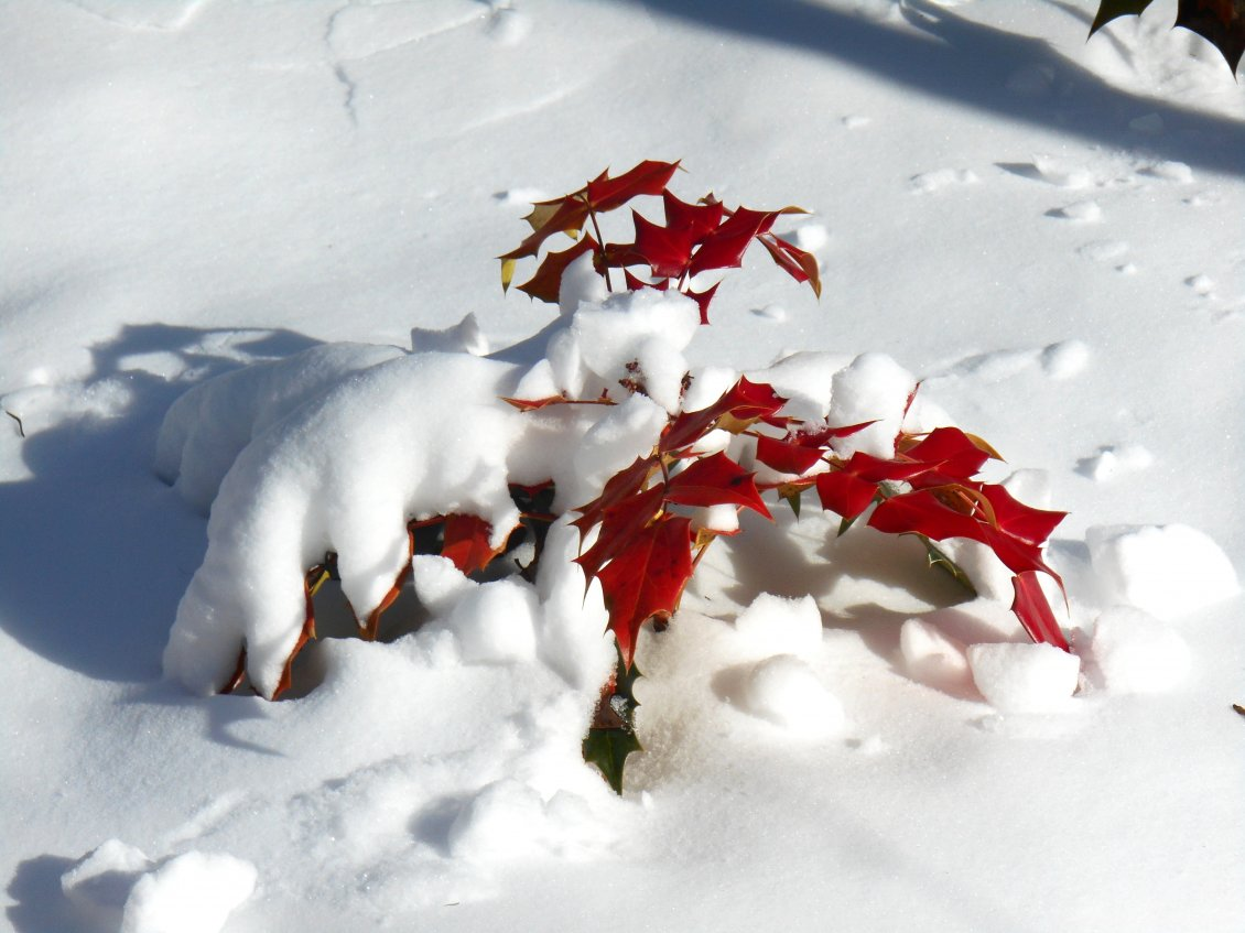 Download Wallpaper Red Autumn leaf under the cold snow - HD wallpaper