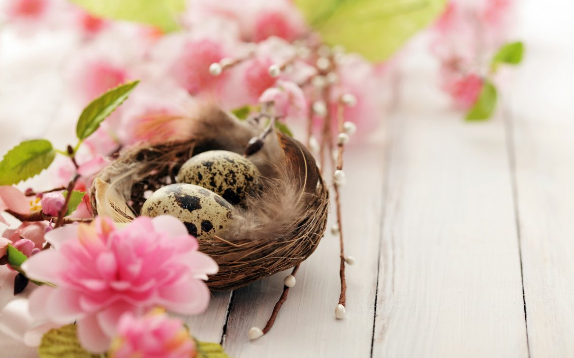 Download Wallpaper Two quail eggs in the nest - Happy Spring time