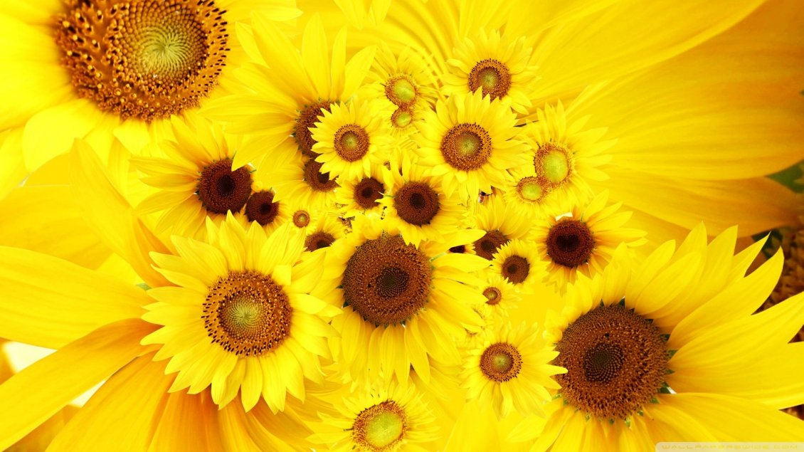 Golden flowers - Happy sunflowers on the wall