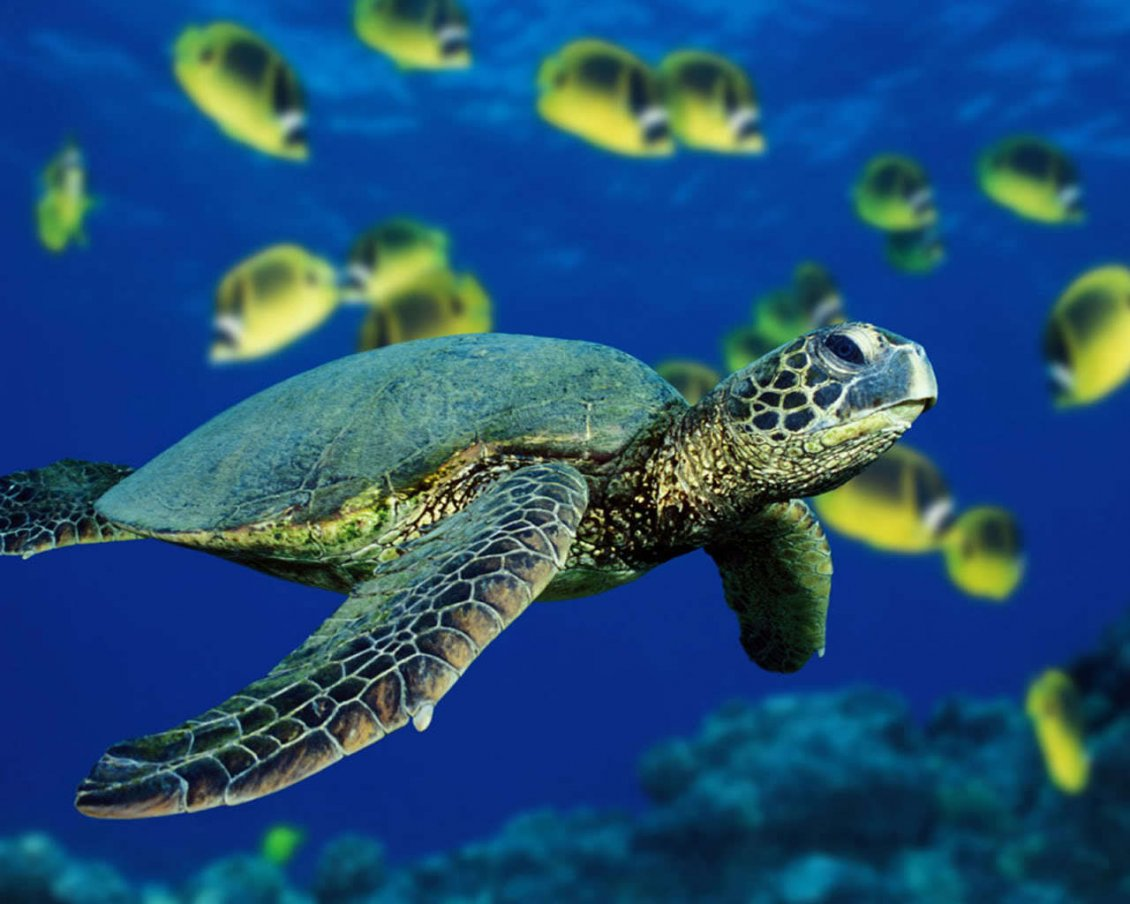 Download Wallpaper Turtle swimming under the ocean water - HD see animal