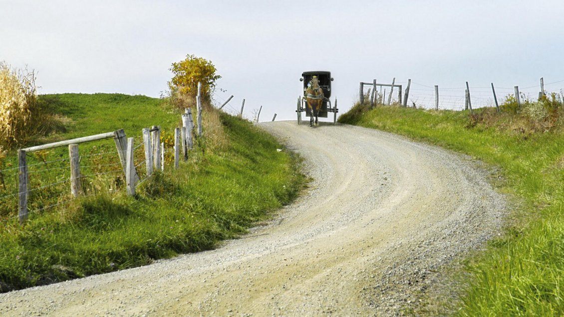 Download Wallpaper Walk with the horse on a country road - Green field