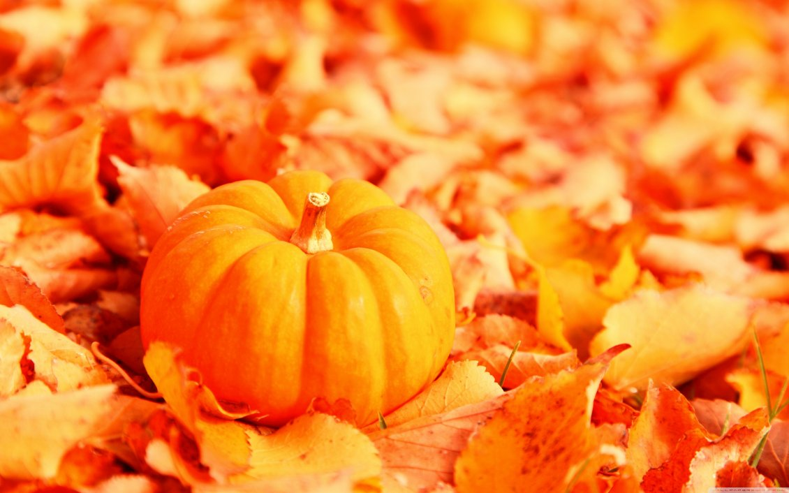 Download Wallpaper Wonderful orange pumpkin on an Autumn leaves carpet