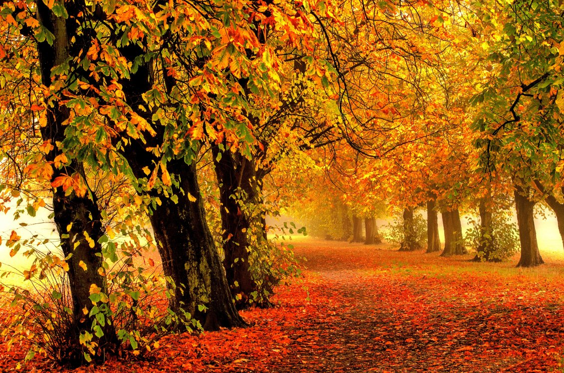 Download Wallpaper Path full with rusty Autumn lesvea in the forest - Season