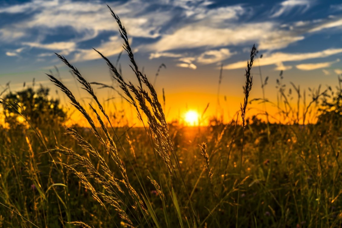 Download Wallpaper Sunset time over the wheat field - Summer and Autumn seasons