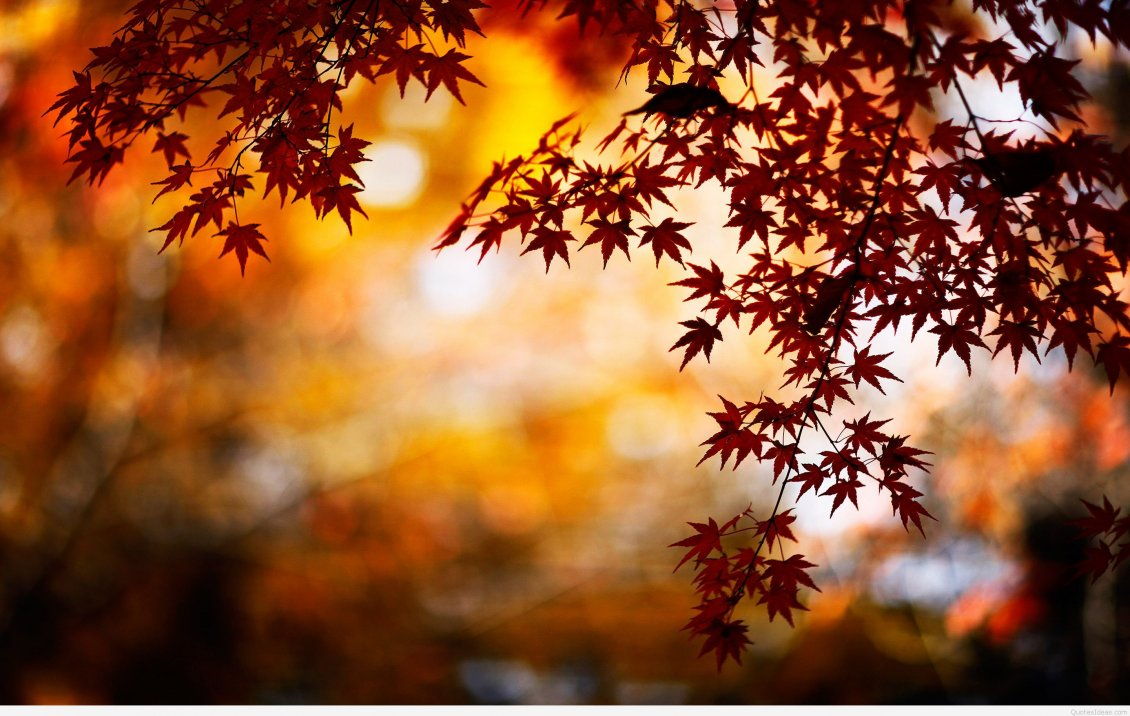 Download Wallpaper Little rusty star leaves - Good morning Autumn day