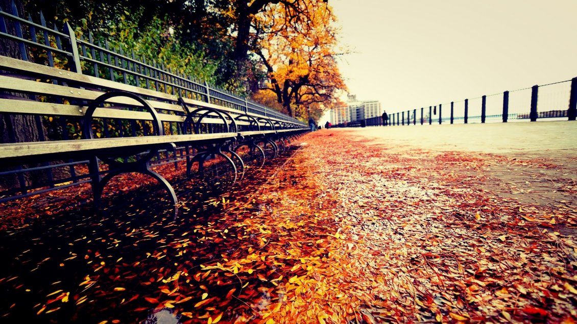 Path Full With Autumn Leaves Near The Park Hd Wallpaper