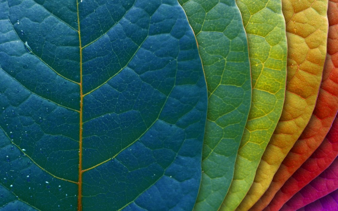 Download Wallpaper Macro wonderful Autumn leaves - Rainbow colors