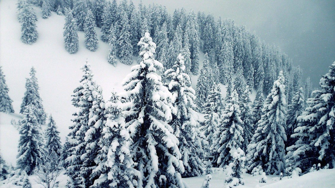 Download Wallpaper Wonderful mountain trees full with white snow - Pure Nature