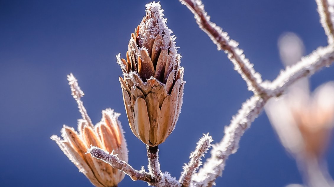 Download Wallpaper Frozen Branch and a wonderful dark blue sky- Macro wallpaper