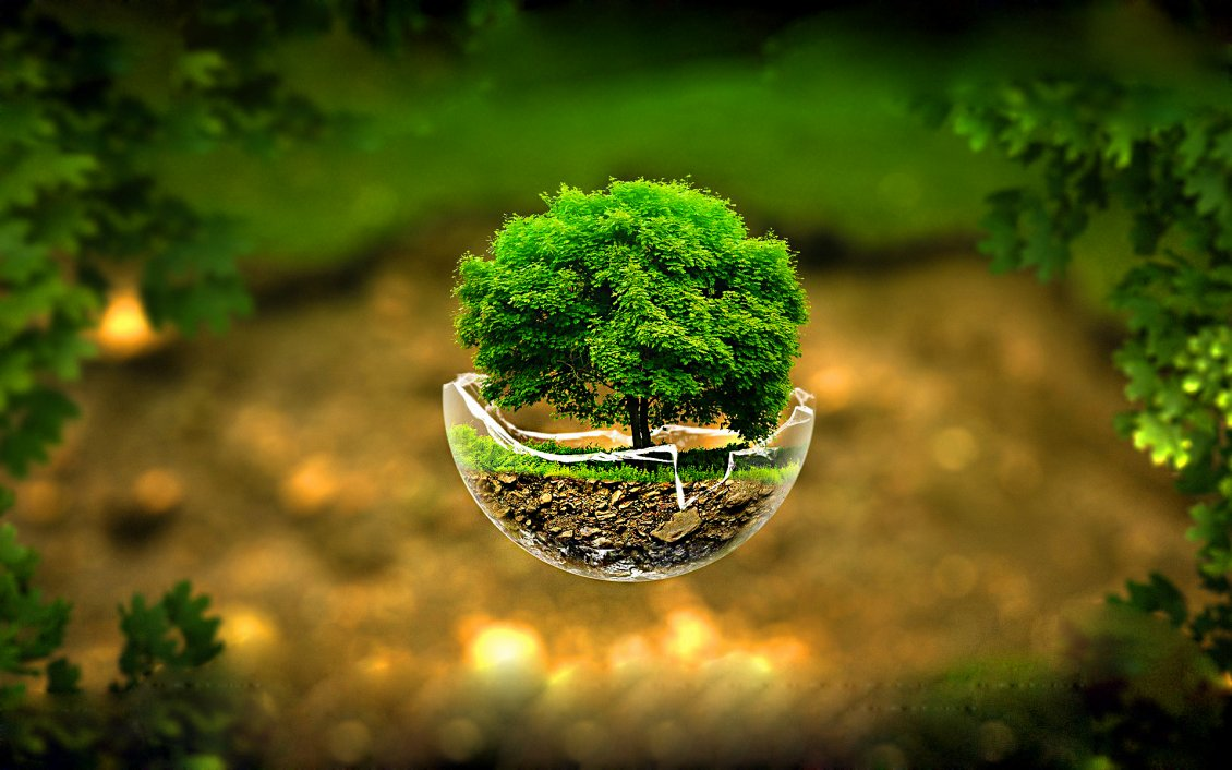 Download Wallpaper Small tree in a globe glass -Nature lives everywhere is love
