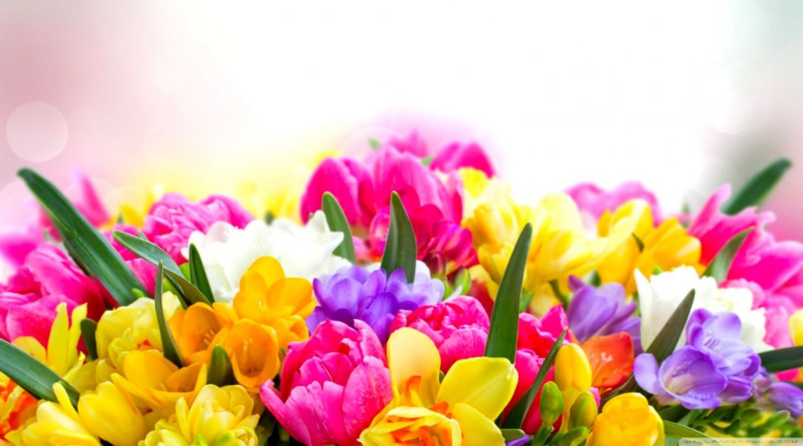 Download Wallpaper Magic colors in a wonderful bouquet of spring flowers