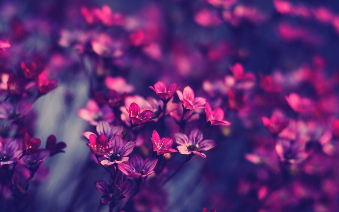 Download Wallpaper Spring flowers - Magic and romantic moment from the nature