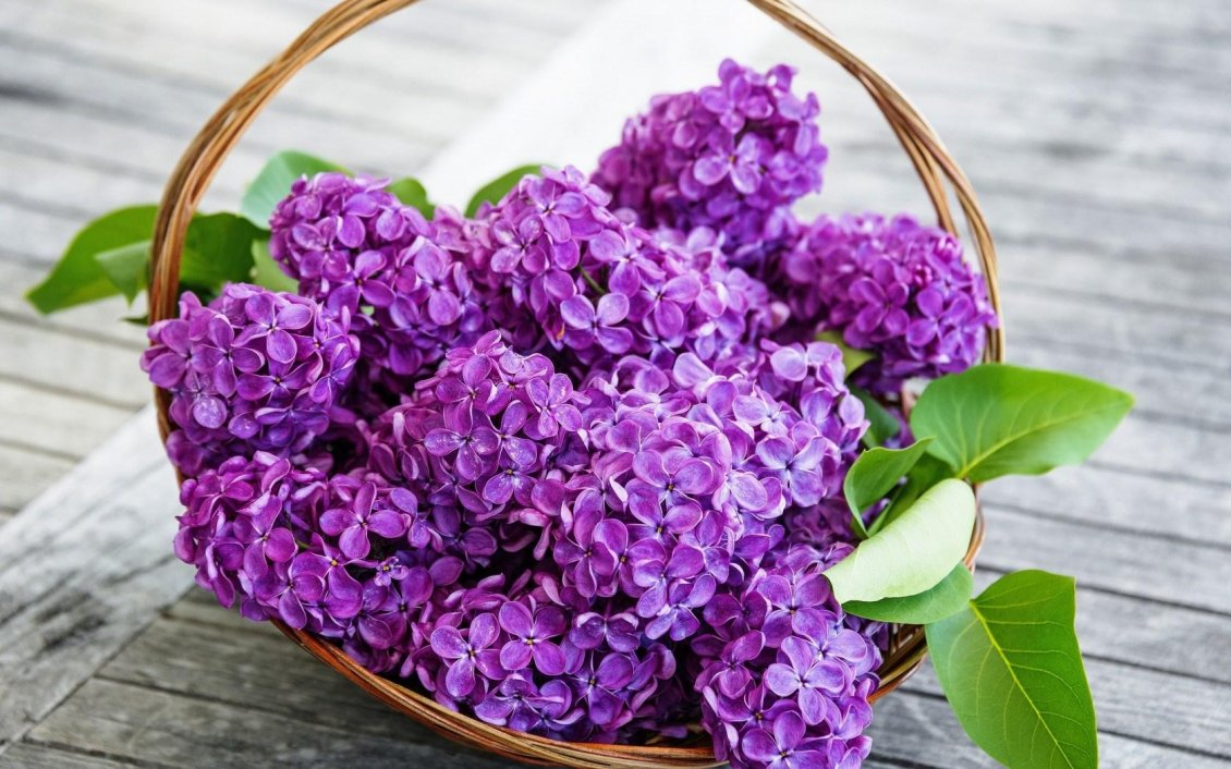 Download Wallpaper Purple Lilac flowers in a basket - Spring time season