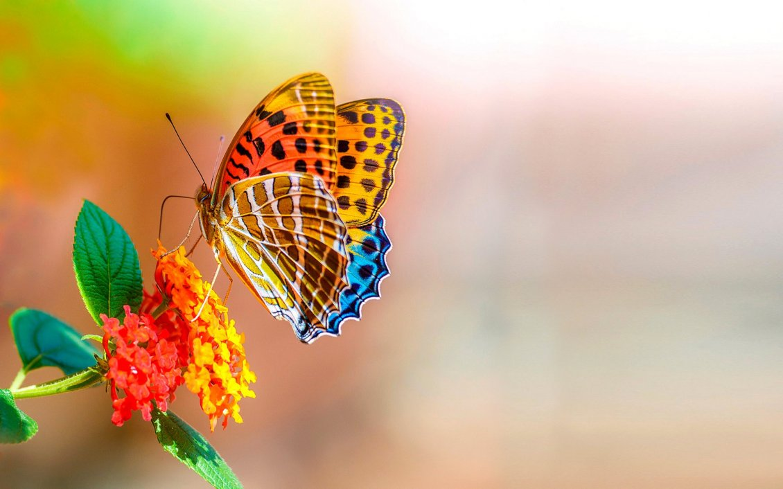 Download Wallpaper Wonderful golden butterfly on a red flowers - Sunlight