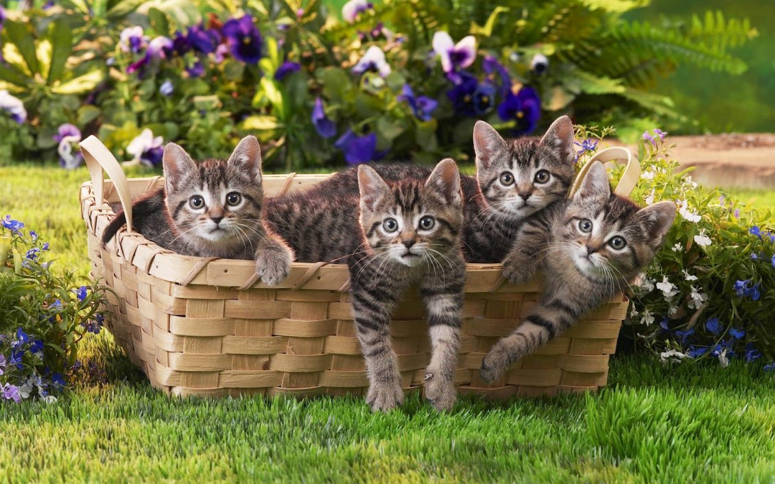 Download Wallpaper Four grey tiger cats in a basket - Sweet domestic animals