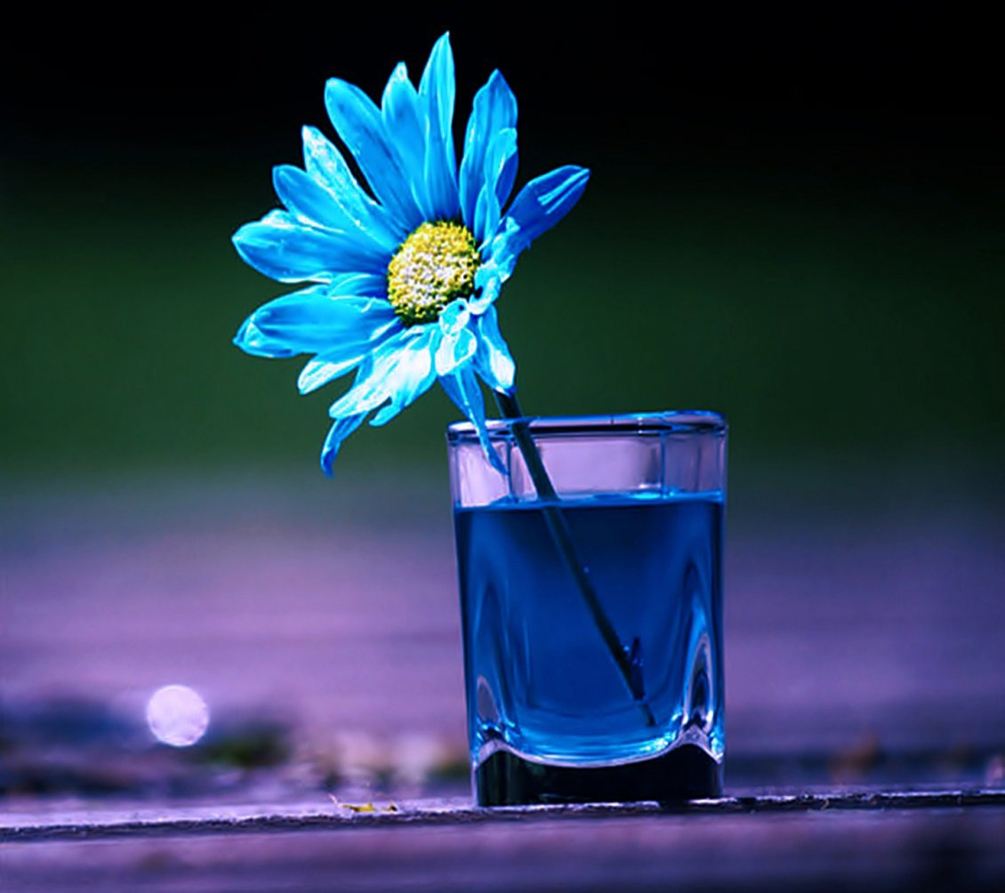 Download Wallpaper Blue flower in a glass with blue water Abstract 3D wallpaper