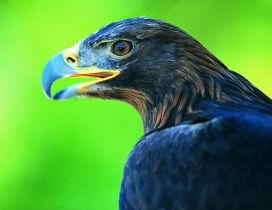 Dark blue eagle on a green background