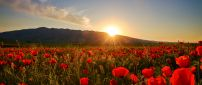 Nature wallpaper - Sunset, field with poppies and hills