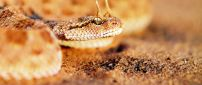 Devil horned snake HD