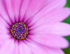 Big pink flower - HD macro wallpaper