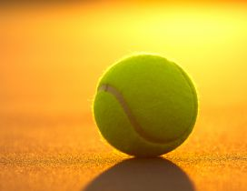 Tennis ball - Sport HD wallpaper