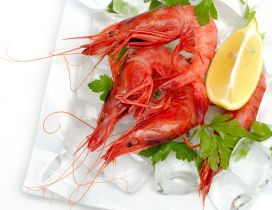 Crayfish on dish with lemon and ice
