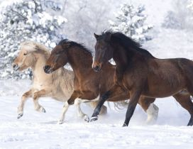 Three different horses running in the snow