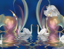 Many swan swim on the water