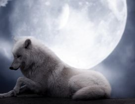 White wolf in light of moon in the night