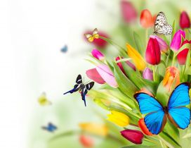 Different butterflies on a bouquet of tulips