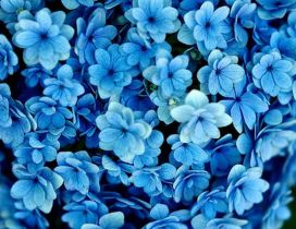 Many blue flowers - Beautiful wallpaper