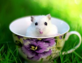 White hamster in a coffee cup in the grass
