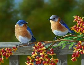 Two beautiful birds on a fence
