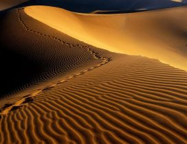 Footprints in the sand hills in desert