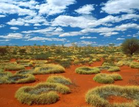 Small rings of green grass in desert Australia