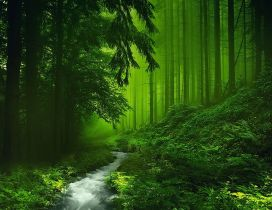 A clear river in the green forest - Fantasy place