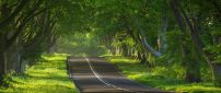 Very nice road with trees on both sides