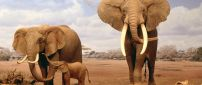Elephant family in the dessert - HD wild animal