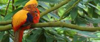 Colorful parrot on the branch of trees