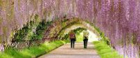 A beautiful tunnel of spring flowers