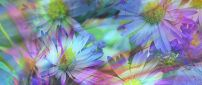 Abstract flowers - Art Design wallpaper