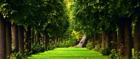 Green nature in the forest - Nature wallpaper